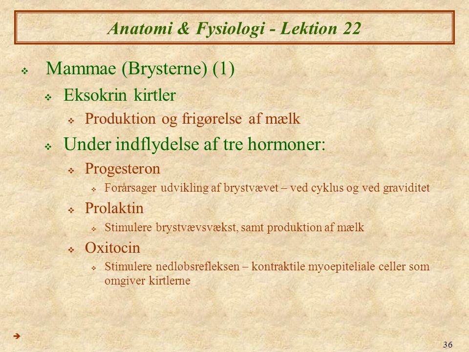 36 Anatomi & Fysiologi - Lektion 22  Mammae (Brysterne) (1)  Eksokrin kirtler  Produktion og frigørelse af mælk  Under indflydelse af tre hormoner:  Progesteron  Forårsager udvikling af brystvævet – ved cyklus og ved graviditet  Prolaktin  Stimulere brystvævsvækst, samt produktion af mælk  Oxitocin  Stimulere nedløbsrefleksen – kontraktile myoepiteliale celler som omgiver kirtlerne 