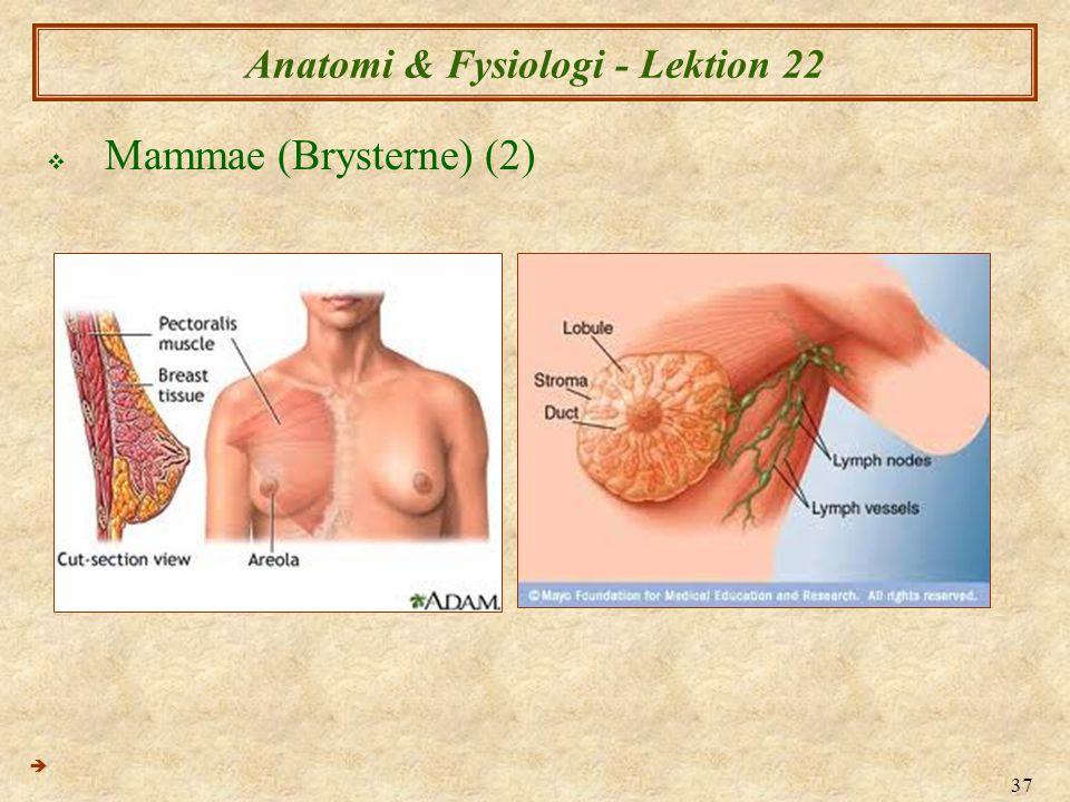 37 Anatomi & Fysiologi - Lektion 22  Mammae (Brysterne) (2) 