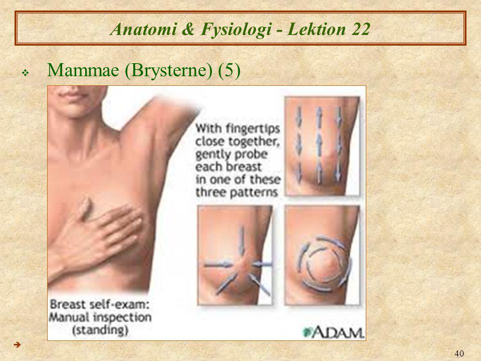 40 Anatomi & Fysiologi - Lektion 22  Mammae (Brysterne) (5) 