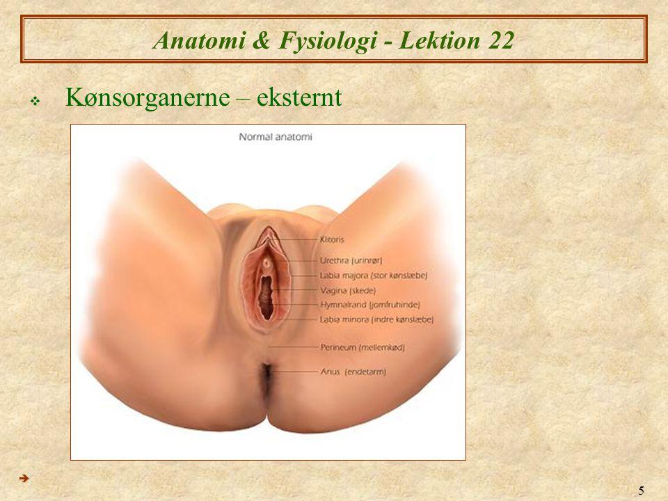 26 Anatomi & Fysiologi - Lektion 22  Cervix (livmoderhals) ændringer med cyklus  8 & 12 dage 