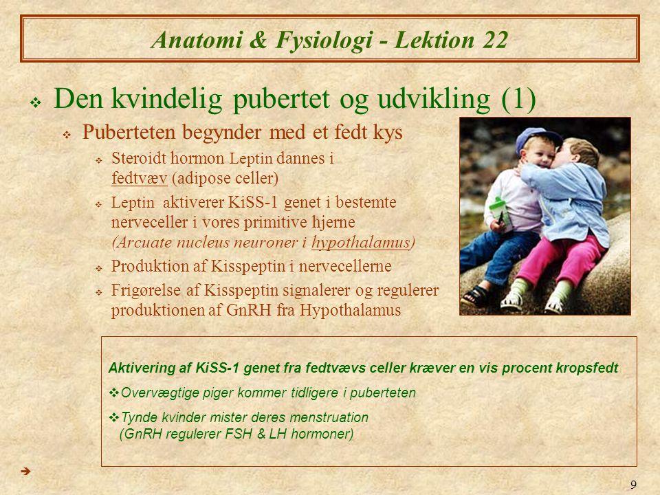 9 Anatomi & Fysiologi - Lektion 22  Den kvindelig pubertet og udvikling (1)  Puberteten begynder med et fedt kys  Steroidt hormon Leptin dannes i fedtvæv (adipose celler)  Leptin a ktiverer KiSS-1 genet i bestemte nerveceller i vores primitive hjerne (Arcuate nucleus neuroner i hypothalamus)  Produktion af Kisspeptin i nervecellerne  Frigørelse af Kisspeptin signalerer og regulerer produktionen af GnRH fra Hypothalamus  Aktivering af KiSS-1 genet fra fedtvævs celler kræver en vis procent kropsfedt  Overvægtige piger kommer tidligere i puberteten  Tynde kvinder mister deres menstruation (GnRH regulerer FSH & LH hormoner)