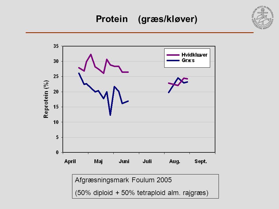 Protein (græs/kløver) Afgræsningsmark Foulum 2005 (50% diploid + 50% tetraploid alm. rajgræs)