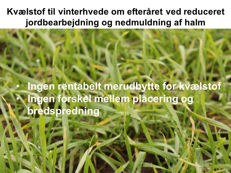 Kvælstof til vinterhvede om efteråret ved reduceret jordbearbejdning og nedmuldning af halm Oversigten 2014, s.