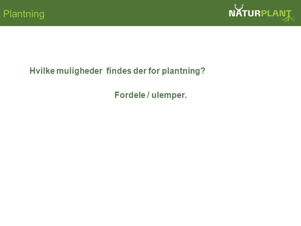 Hvilke muligheder findes der for plantning Fordele / ulemper. Plantning