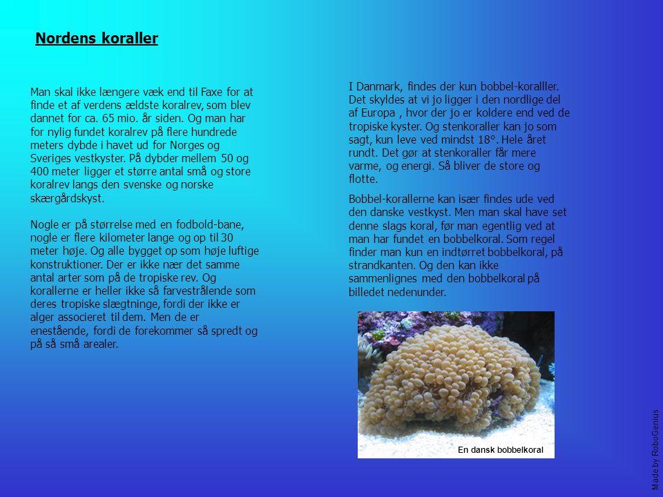 Nordens koraller Man skal ikke længere væk end til Faxe for at finde et af verdens ældste koralrev, som blev dannet for ca.