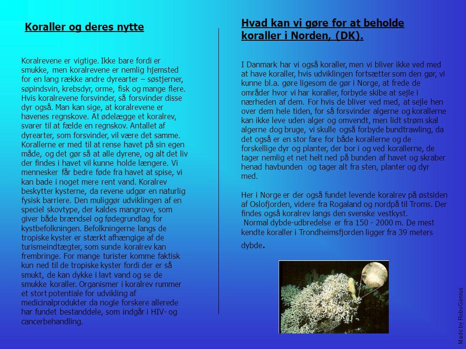 Koraller og deres nytte Koralrevene er vigtige.