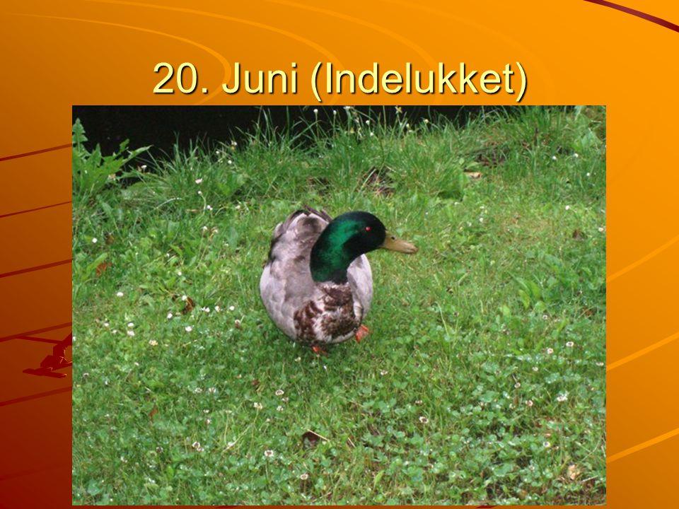 20. Juni (Indelukket)