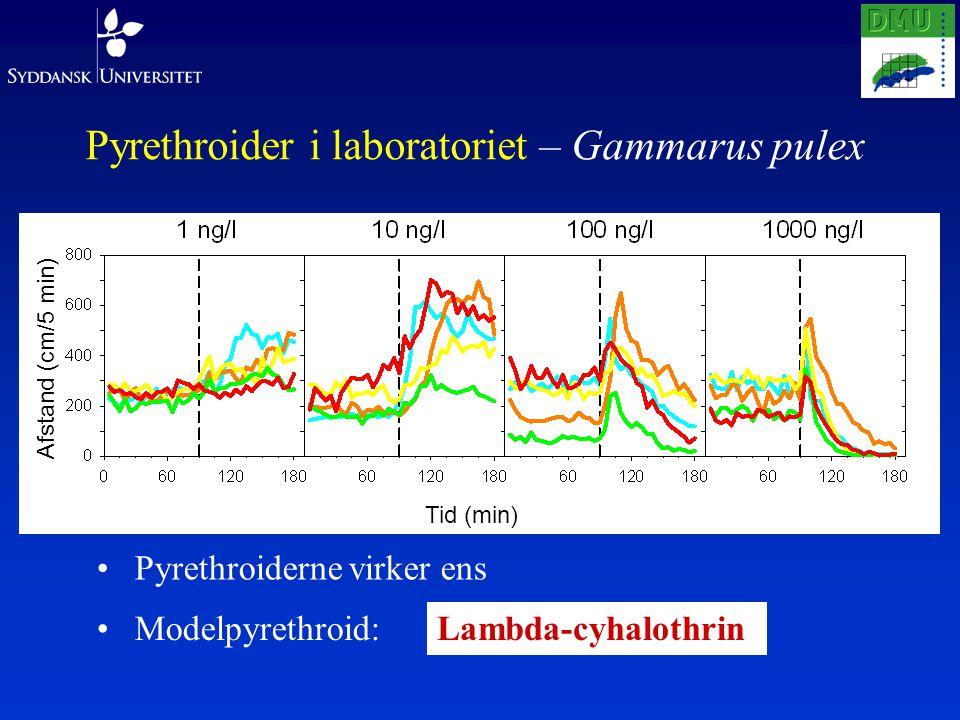 Pyrethroider i laboratoriet – Gammarus pulex Pyrethroiderne virker ens Modelpyrethroid:Lambda-cyhalothrin Afstand (cm/5 min) Tid (min)