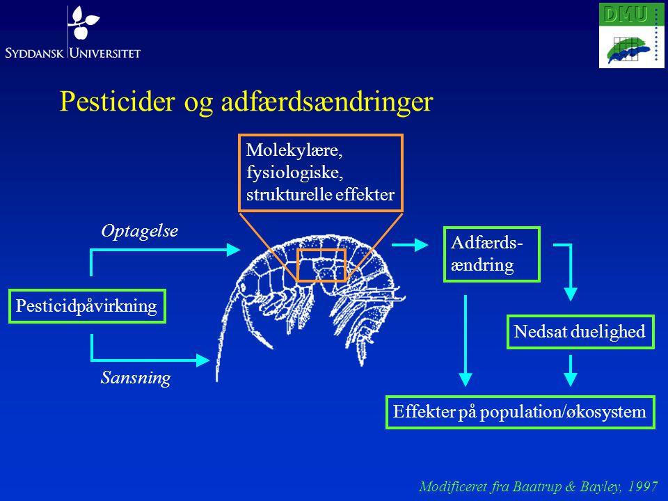 Pesticider og adfærdsændringer Pesticidpåvirkning Sansning Optagelse Adfærds- ændring Nedsat duelighed Effekter på population/økosystem Molekylære, fysiologiske, strukturelle effekter Modificeret fra Baatrup & Bayley, 1997