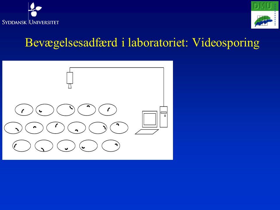 Bevægelsesadfærd i laboratoriet: Videosporing