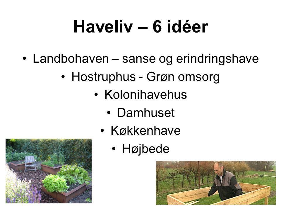 Haveliv – 6 idéer Landbohaven – sanse og erindringshave Hostruphus - Grøn omsorg Kolonihavehus Damhuset Køkkenhave Højbede