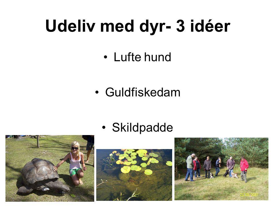 Udeliv med dyr- 3 idéer Lufte hund Guldfiskedam Skildpadde