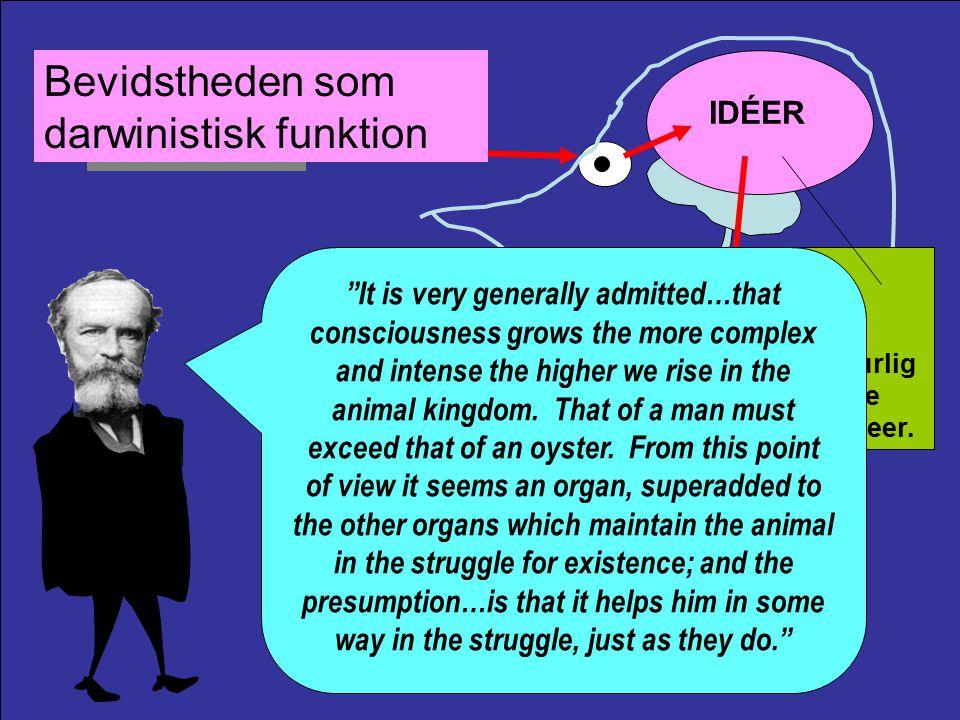 Stimulus OplevelsenBevidstheden IDÉER Ideo-motoriske teori Respons INDLÆRTSUCCES.