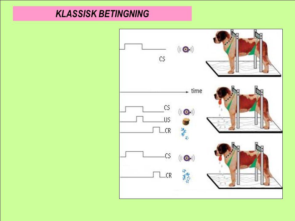 Betinget stimulus Betinget respons KLASSISK BETINGNING Signalindlæring