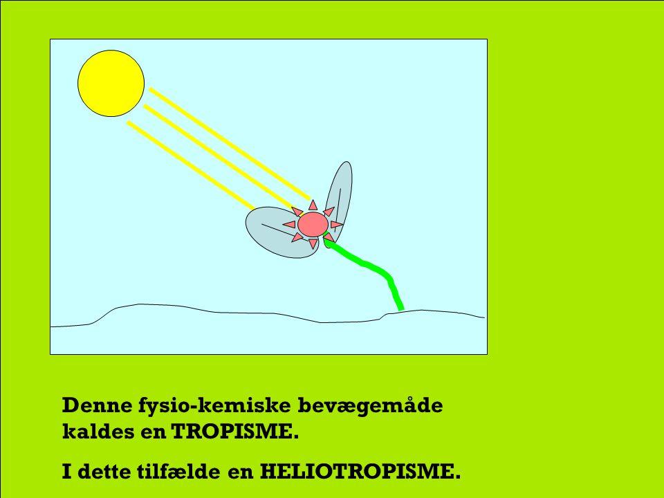 at planten 'strækker sig' mod sollyset.