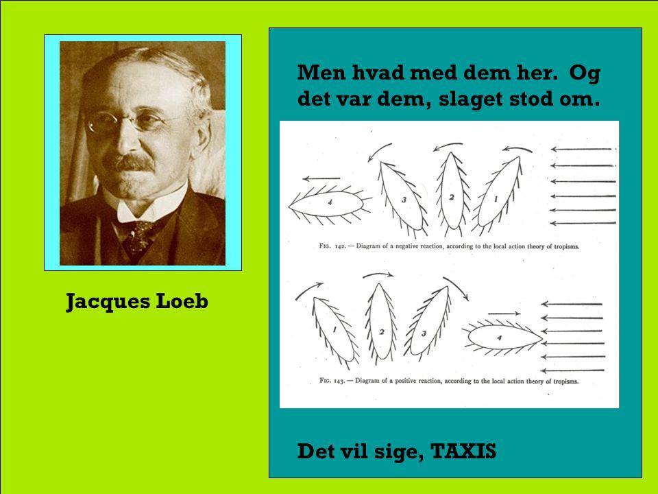 Jacques Loeb Loeb mente, at den samme fysisk-kemiske tropisme- mekanisme kunne forklare dyrenes bevægelsemåde.