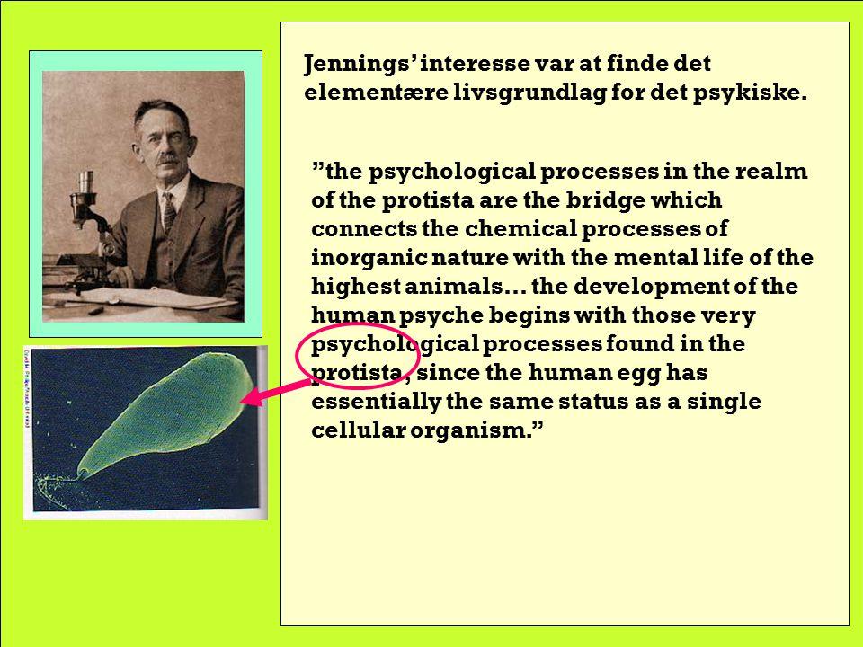 Herbert Spencer Jennings 1868-1947 Jennings var søn af en Darwin- entusiastisk farmer-doctor og begyndte at studere hvirvelløse dyrs fysiologi og adfærd, først på Harvard (hvor hans lærer var Loeb-fan), senere i Chicago, hvor Dewey gjorde stort indtryk på ham.