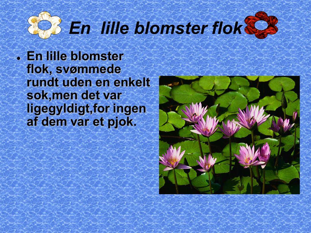 En lille blomster flok En lille blomster flok, svømmede rundt uden en enkelt sok,men det var ligegyldigt,for ingen af dem var et pjok En lille blomster flok, svømmede rundt uden en enkelt sok,men det var ligegyldigt,for ingen af dem var et pjok.