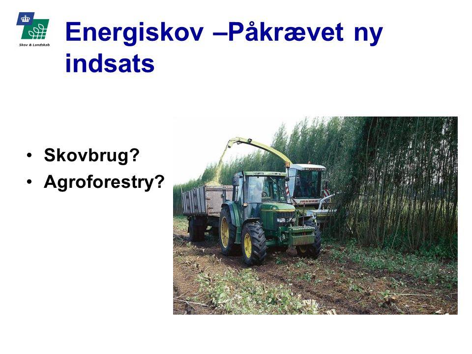 Skovbrug Agroforestry Energiskov –Påkrævet ny indsats