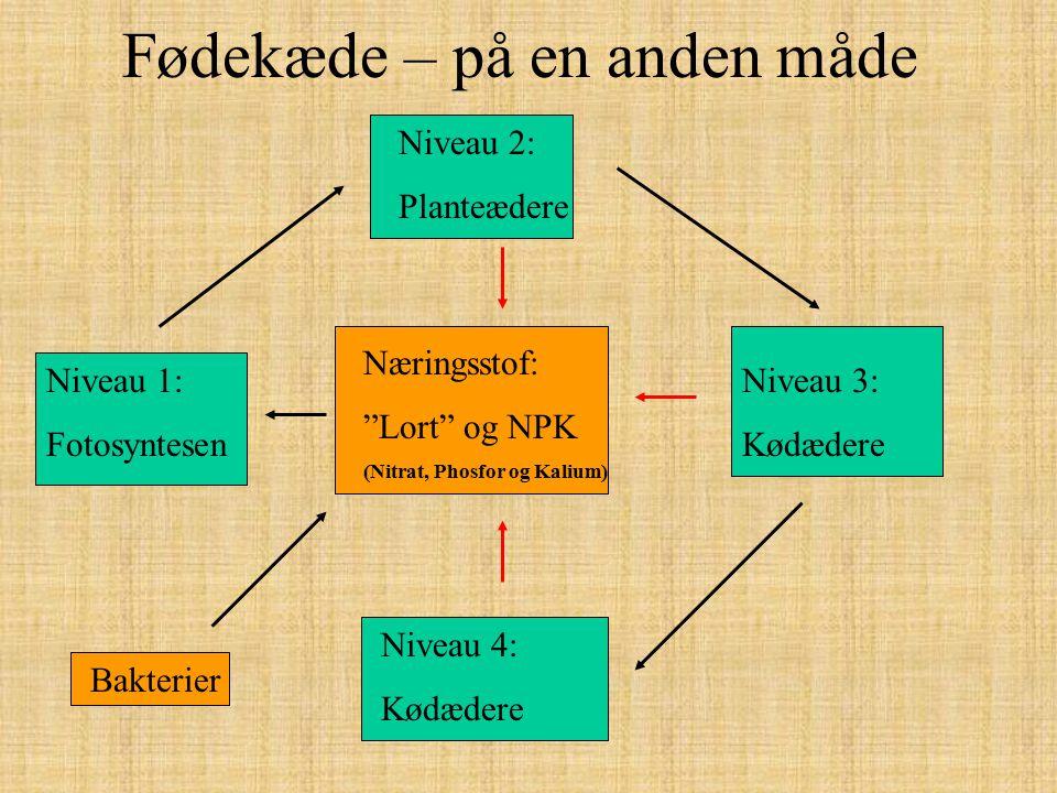 """Fødekæde – på en anden måde Niveau 2: Planteædere Niveau 1: Fotosyntesen Næringsstof: """"Lort"""" og NPK (Nitrat, Phosfor og Kalium) Niveau 3: Kødædere Niv"""