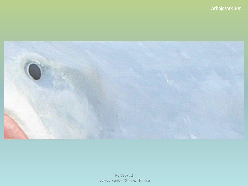 Arbejdsark 30q Perspekt 2 Rockwool Fonden © Knægt & Vinter