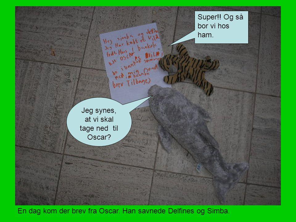 Jeg synes, at vi skal tage ned til Oscar? Super!! Og så bor vi hos ham. En dag kom der brev fra Oscar. Han savnede Delfines og Simba.