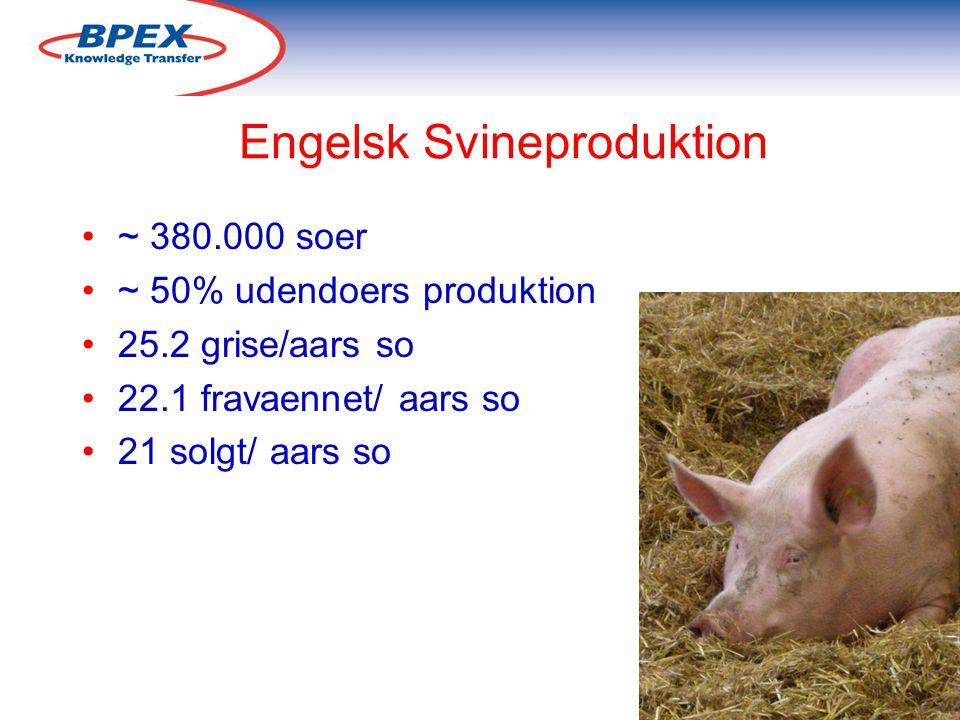 Engelsk Svineproduktion ~ 380.000 soer ~ 50% udendoers produktion 25.2 grise/aars so 22.1 fravaennet/ aars so 21 solgt/ aars so