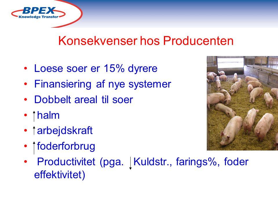 Konsekvenser hos Producenten Loese soer er 15% dyrere Finansiering af nye systemer Dobbelt areal til soer halm arbejdskraft foderforbrug Productivitet (pga.
