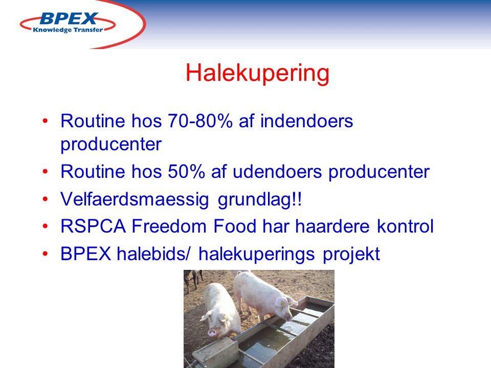 Halekupering Routine hos 70-80% af indendoers producenter Routine hos 50% af udendoers producenter Velfaerdsmaessig grundlag!.