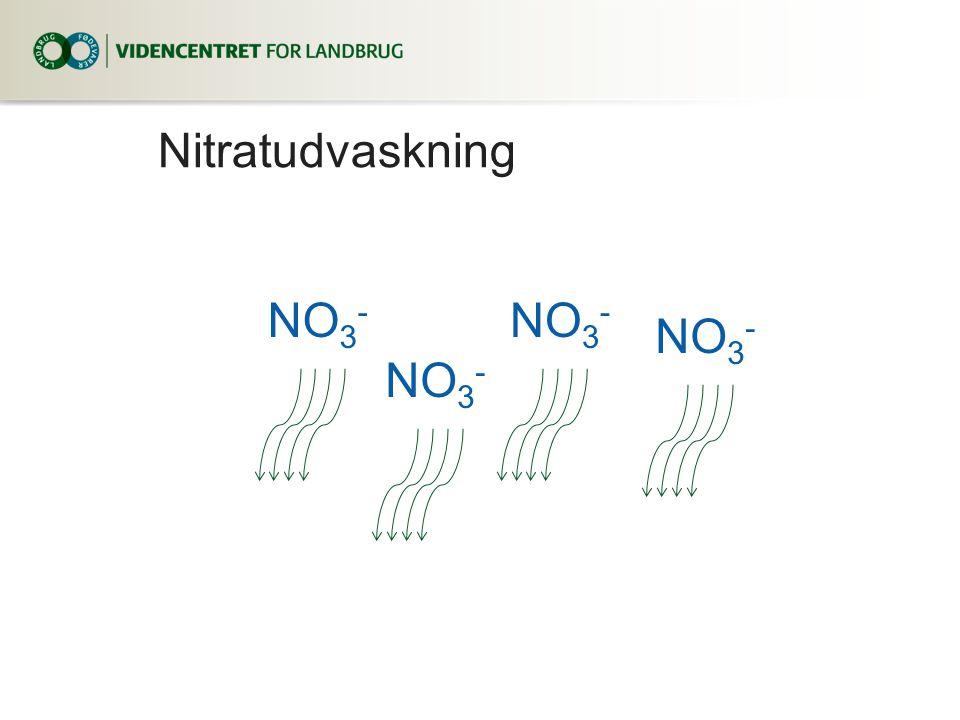 Nitratudvaskning NO 3 -