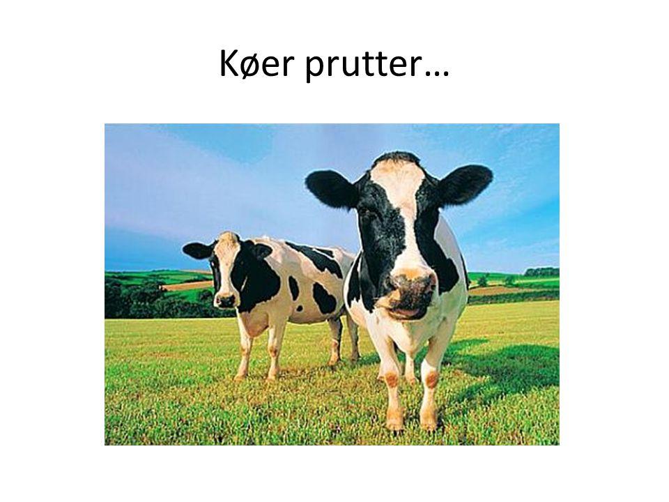 Køer prutter…