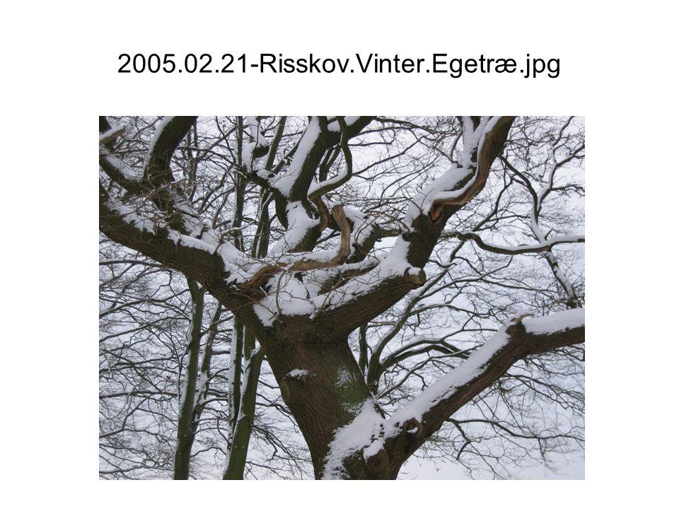 2005.02.21-Risskov.Vinter.Egetræ.jpg