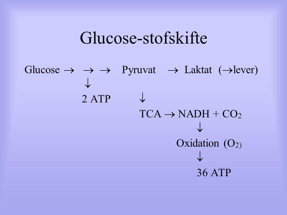Glucose-stofskifte Glucose    Pyruvat  Laktat (  lever)  2 ATP  TCA  NADH + CO 2  Oxidation (O 2)  36 ATP