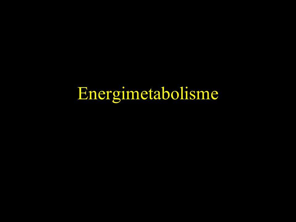 Energimetabolisme