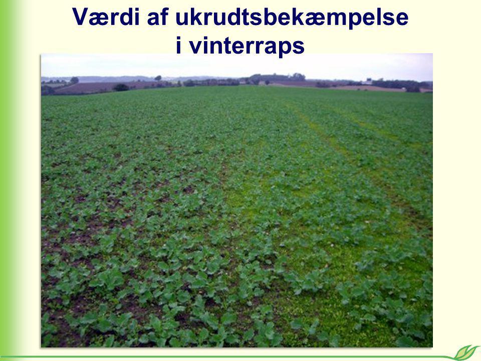 Kort sigt : Positive nettomerudbytter Langt sigt: Sanering af græsukrudt Værdi af ukrudtsbekæmpelse i vinterraps