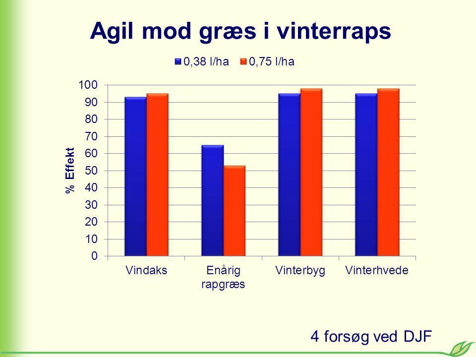 Agil mod græs i vinterraps 4 forsøg ved DJF