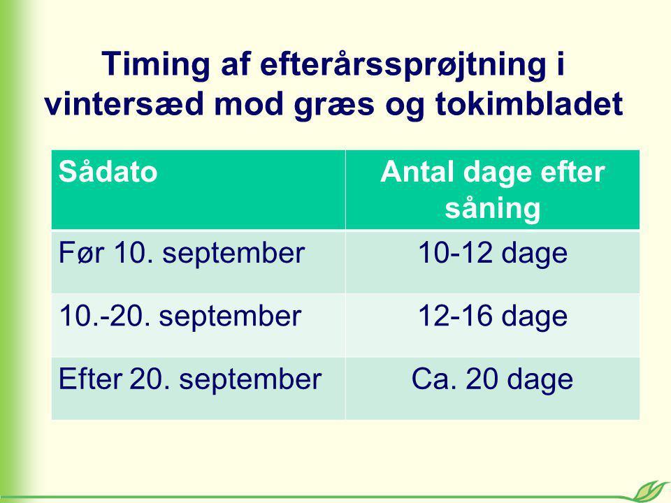 Timing af efterårssprøjtning i vintersæd mod græs og tokimbladet SådatoAntal dage efter såning Før 10.