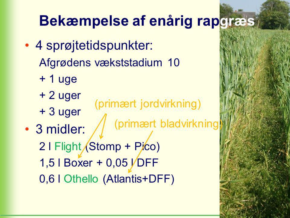 Bekæmpelse af enårig rapgræs 4 sprøjtetidspunkter: Afgrødens vækststadium 10 + 1 uge + 2 uger + 3 uger 3 midler: 2 l Flight (Stomp + Pico) 1,5 l Boxer + 0,05 l DFF 0,6 l Othello (Atlantis+DFF) (primært jordvirkning) (primært bladvirkning)