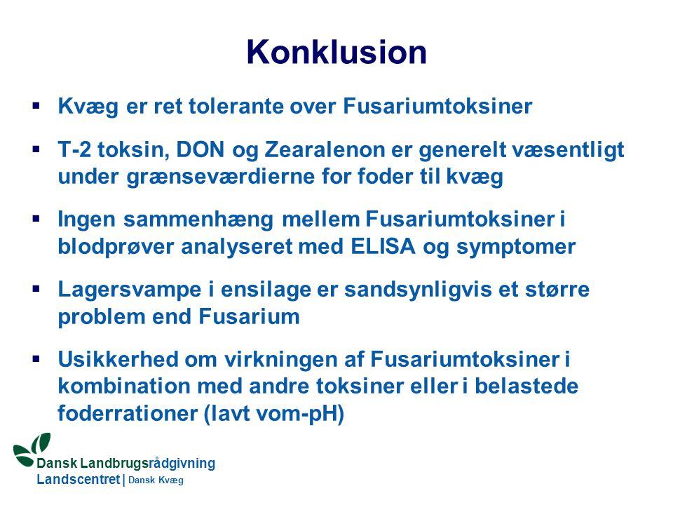 Dansk Landbrugsrådgivning Landscentret | Dansk Kvæg Konklusion  Kvæg er ret tolerante over Fusariumtoksiner  T-2 toksin, DON og Zearalenon er generelt væsentligt under grænseværdierne for foder til kvæg  Ingen sammenhæng mellem Fusariumtoksiner i blodprøver analyseret med ELISA og symptomer  Lagersvampe i ensilage er sandsynligvis et større problem end Fusarium  Usikkerhed om virkningen af Fusariumtoksiner i kombination med andre toksiner eller i belastede foderrationer (lavt vom-pH)