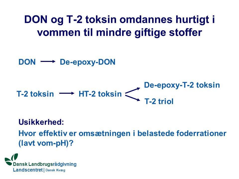 Dansk Landbrugsrådgivning Landscentret | Dansk Kvæg DON og T-2 toksin omdannes hurtigt i vommen til mindre giftige stoffer DONDe-epoxy-DON T-2 toksinHT-2 toksin De-epoxy-T-2 toksin T-2 triol Hvor effektiv er omsætningen i belastede foderrationer (lavt vom-pH).