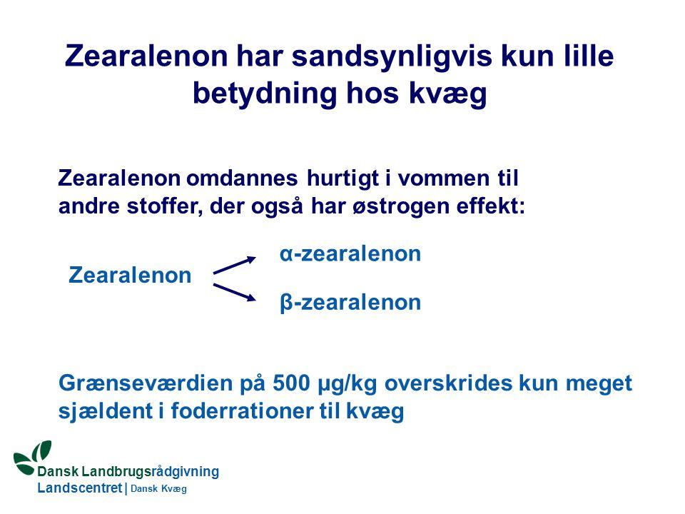 Dansk Landbrugsrådgivning Landscentret | Dansk Kvæg Zearalenon har sandsynligvis kun lille betydning hos kvæg Zearalenon omdannes hurtigt i vommen til andre stoffer, der også har østrogen effekt: Zearalenon α-zearalenon β-zearalenon Grænseværdien på 500 μg/kg overskrides kun meget sjældent i foderrationer til kvæg