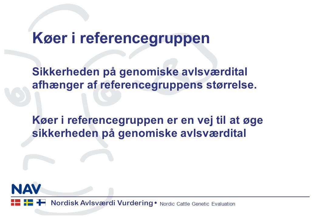 Nordisk Avlsværdi Vurdering Nordic Cattle Genetic Evaluation Køer i referencegruppen Sikkerheden på genomiske avlsværdital afhænger af referencegruppens størrelse.