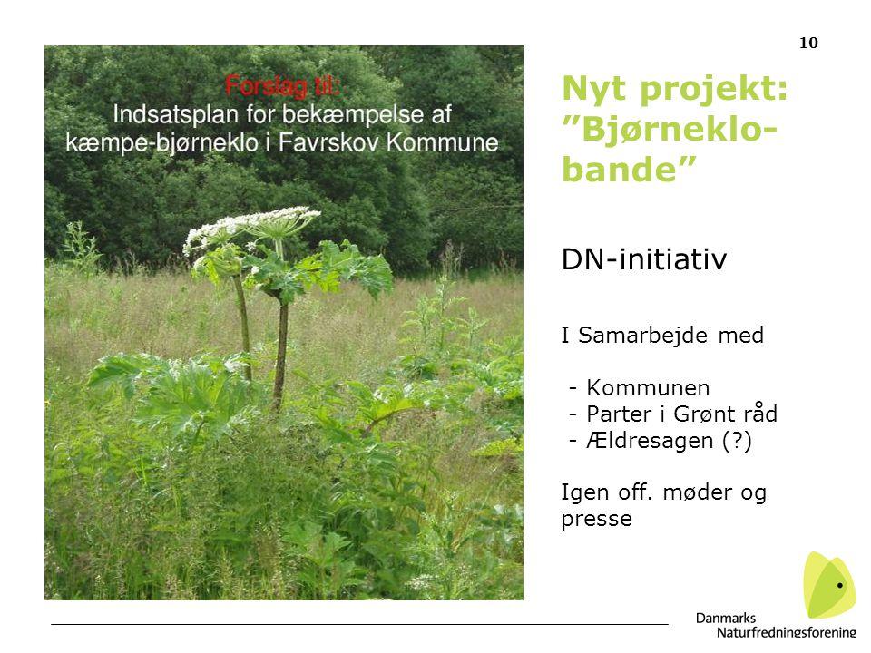 10 Nyt projekt: Bjørneklo- bande DN-initiativ I Samarbejde med - Kommunen - Parter i Grønt råd - Ældresagen ( ) Igen off.