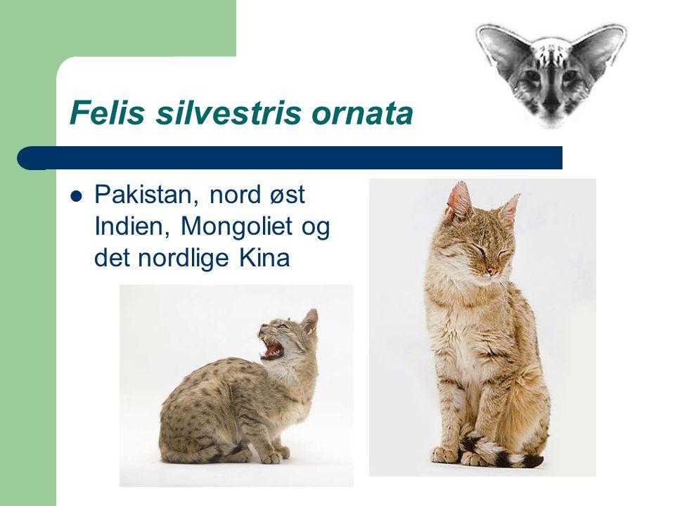 Felis silvestris ornata Pakistan, nord øst Indien, Mongoliet og det nordlige Kina