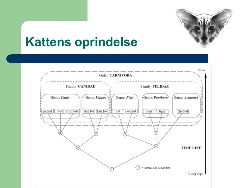 Kattens oprindelse