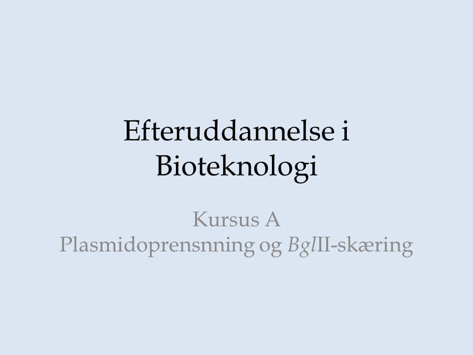 Efteruddannelse i Bioteknologi Kursus A Plasmidoprensnning og Bgl II-skæring