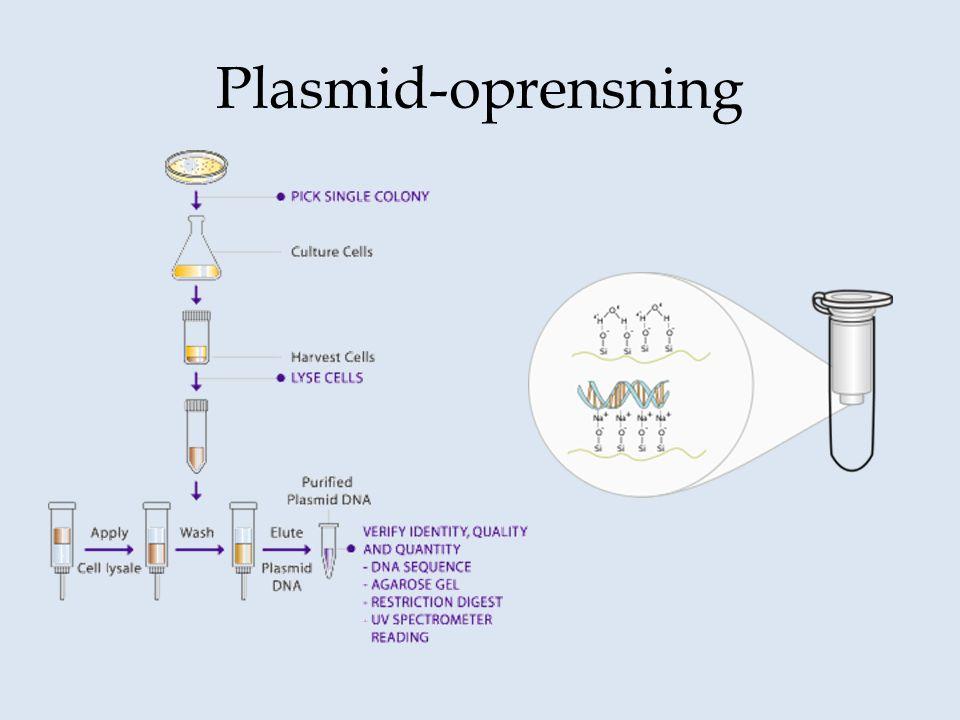 Plasmid-oprensning