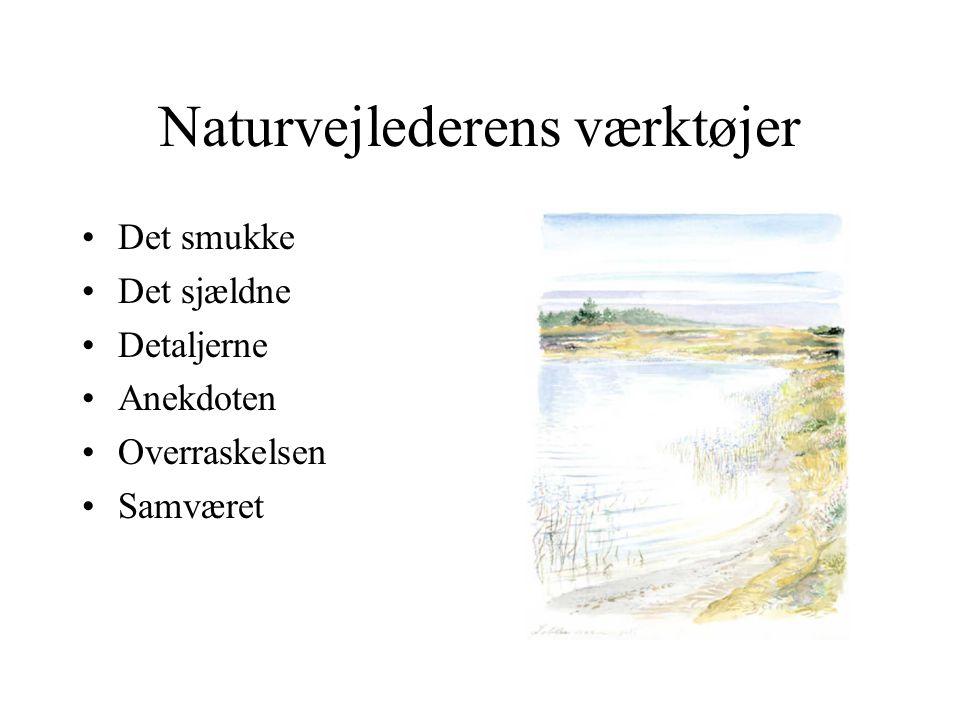 Naturvejlederens værktøjer Det smukke Det sjældne Detaljerne Anekdoten Overraskelsen Samværet