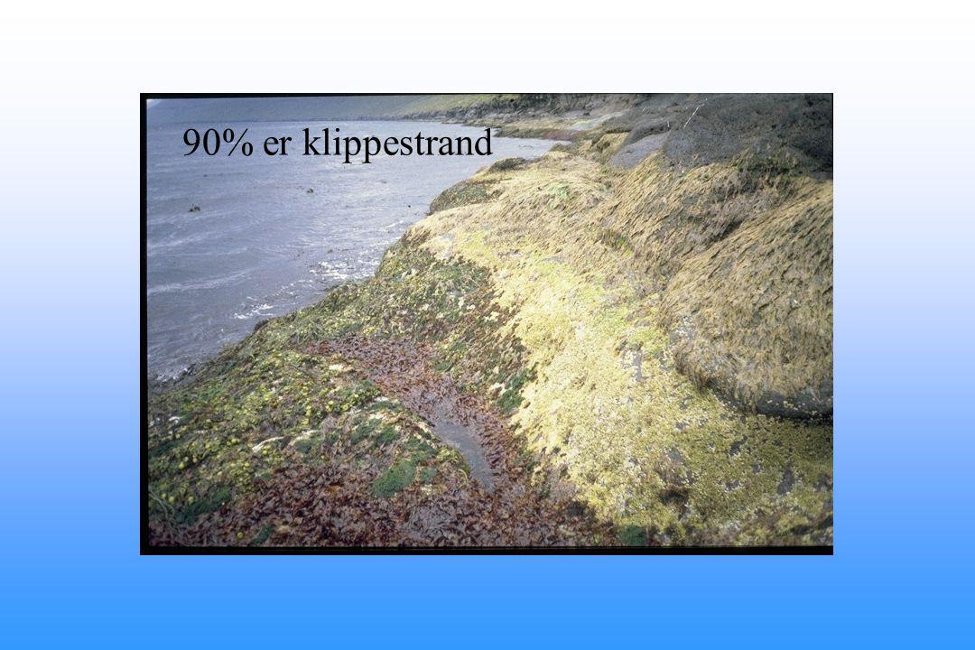90% er klippestrand