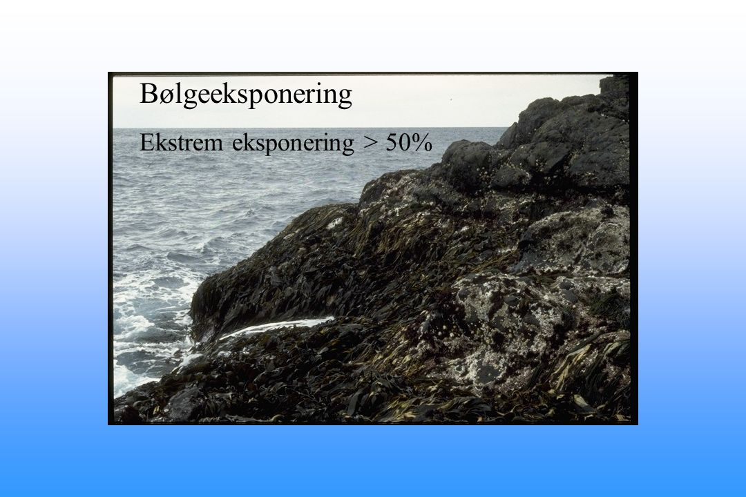 Bølgeeksponering Ekstrem eksponering > 50%